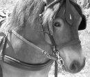 Photo de perfect-pony