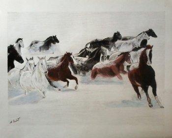 Chevaux Mustangue