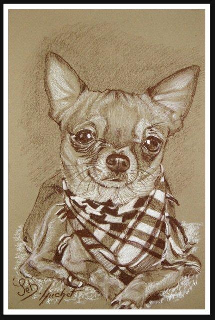 Portrait sépia d'un chihuahua