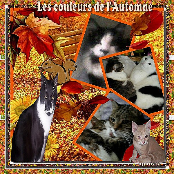 De retour et Bel automne a tous