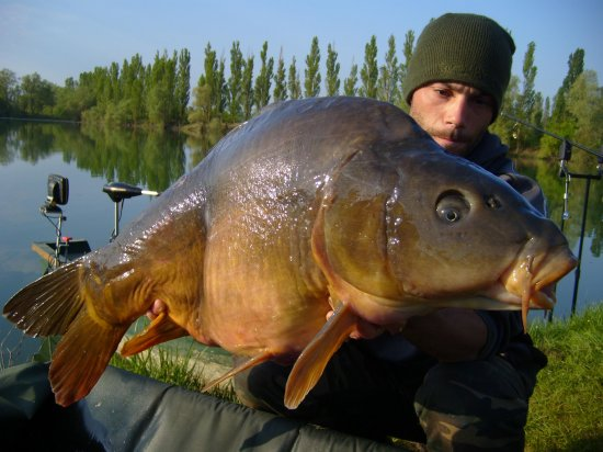 Un vieux poisson !!!