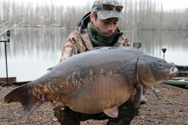 Grosse miroir avec de toute petite nagoire un vieux fish qui a du vécu !!!