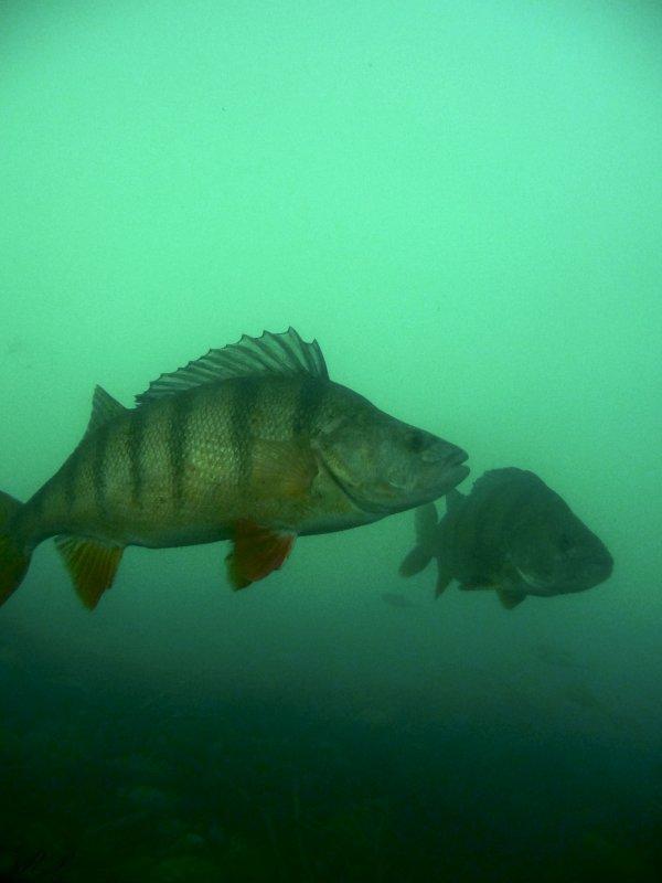 Quelques photos subaquatiques
