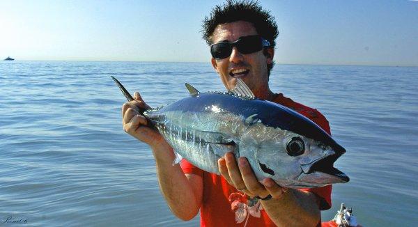 Sessions little tuna