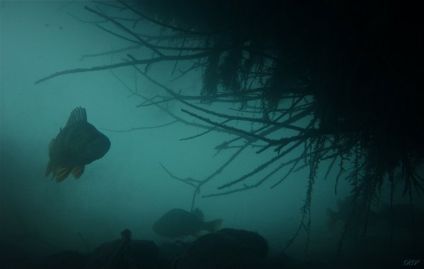 "Le Broc ""underwater"""