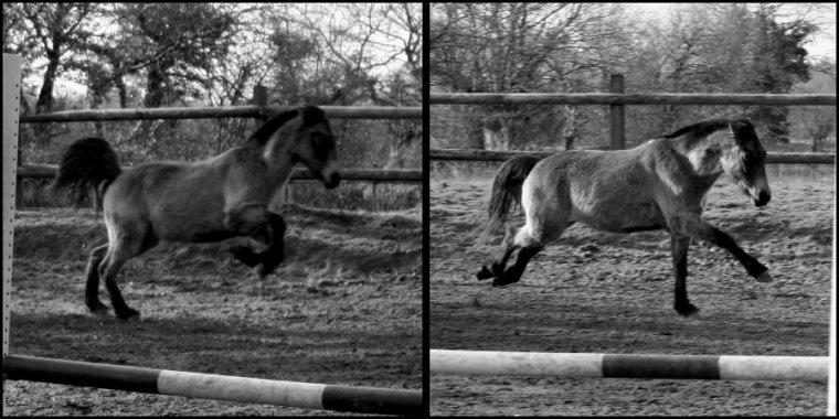 En forme le poney !