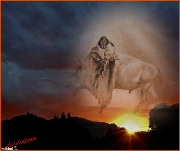 bison blanc