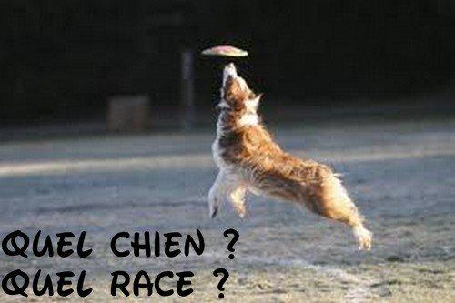 Quel chien ?Quel race ?