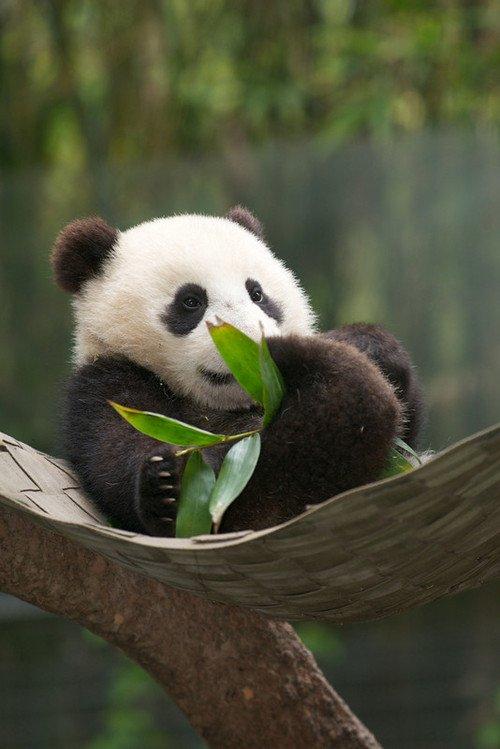 Bambou folie !