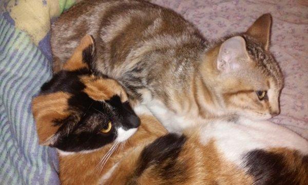 (l) Lilou & Jéna (l)