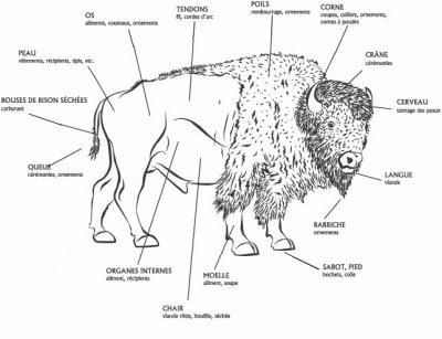 Le bison et au centre de la vie des Lakotas