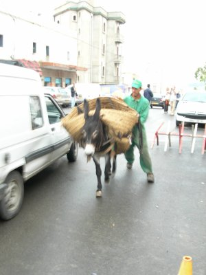 Le petit âne de la Casbah