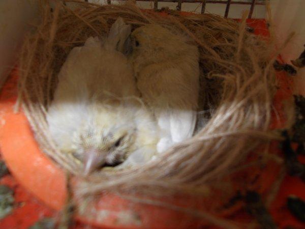 Premiers bébés sevrés de 2012