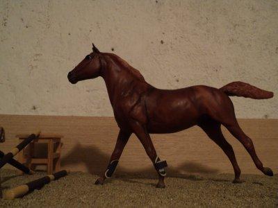 Un poney hyper actif !