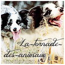 Photo de La-tornade-des-animaux