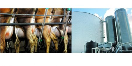 Signez les 3 pétitions ! Contre l'usine à vache !