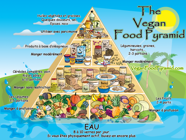 Les pyramides alimentaires