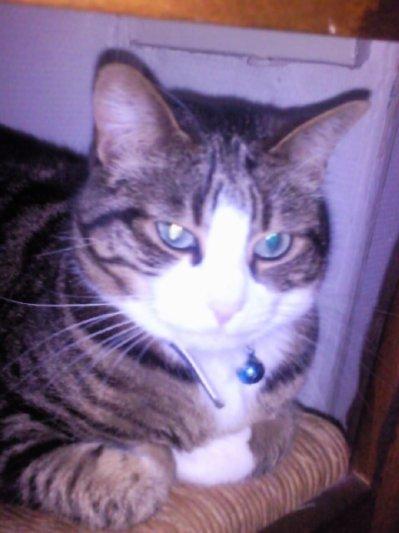 Mon chat !!