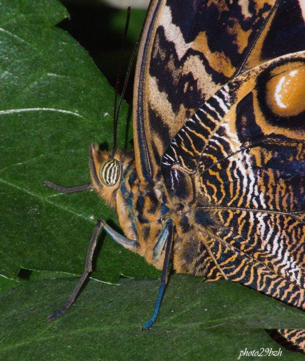 Petits papillons dans une serre (bien sur)