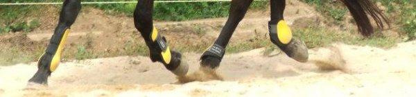 Jeux de Guêtres et Protèges boulets jaune taille cheval HKM