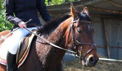 Bridon Taille cheval + mors verdun à rouleaux de cuivres