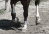 x-eux-the-horse-x
