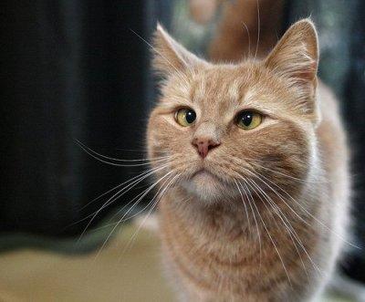 Beau chat atteint de strabisme !