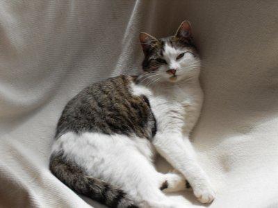 """Mon chat, mon """" Minou Jackson """" à moi =P"""