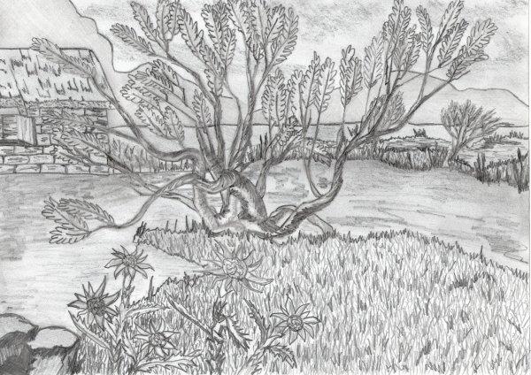 quelque paysages