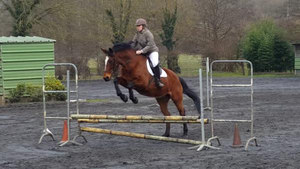 L'equitation : plus qu'un sport, une passion <3