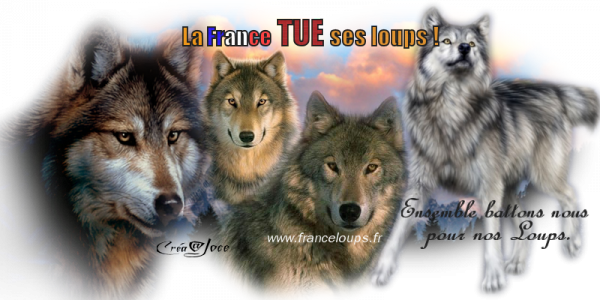 SAUVONS NOS LOUPS !
