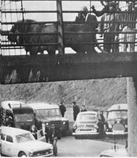 """11  octobre  2016:  """"  S  comme  Safari....""""  ou  """"  Six  lions  sur  l'autoroute...."""""""