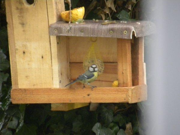 la maison des oiseaux
