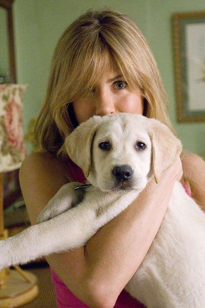 Un chien se fiche éperdument des grosses voitures des belles maisons ou des vêtements de marque. Un morceau de bois mordillé ça lui va très bien. Les chiens se moquent que vous soyez riches ou pauvres, beaux ou laids, intelligents ou bêtes, donnez lui de l'amour et il vous en donnera. Combien d'humains sont capables de ça ? Combien de gens sont capables de vous donner le sentiments que vous compter vraiment pour eux ? Combien de gens arrivent à vous donner l'impression que vous êtes unique au monde ?