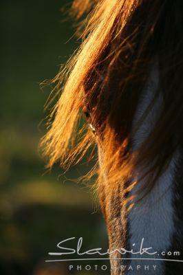 je crois que ma partie préférée chez le cheval c'est ses yeux !