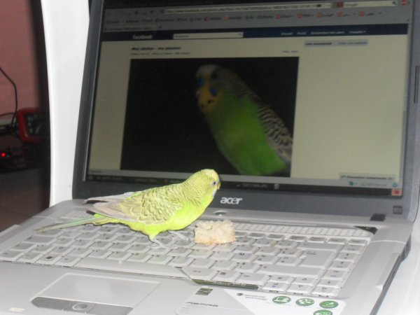 Momo l'informaticien