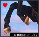 Photo de x-passi-On