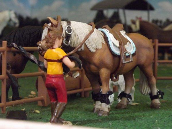 Après-midi horse ball