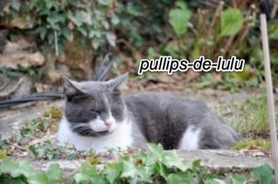 Oggy , mon chat photogénique x)