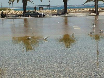 la plage des mouettes;c est 1 place ou il ya toujours de l eau.elles y viennent pour boirent et se baignees