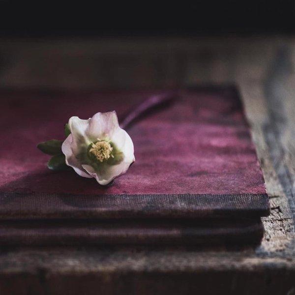 livre et fleur