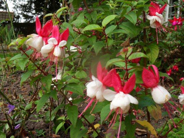 mes fleurs d'automne