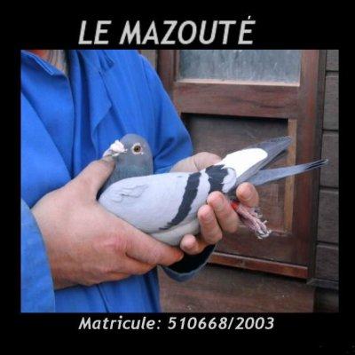 Mort du Mazouté 😢.