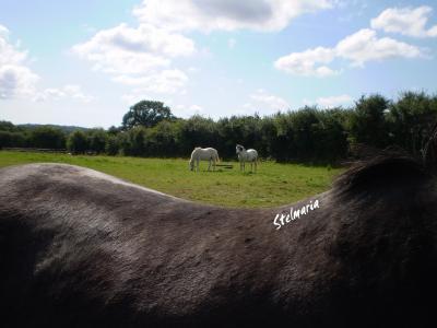 Tout le bonheur du monde est sur le dos d'un cheval. - proverbe arabe.
