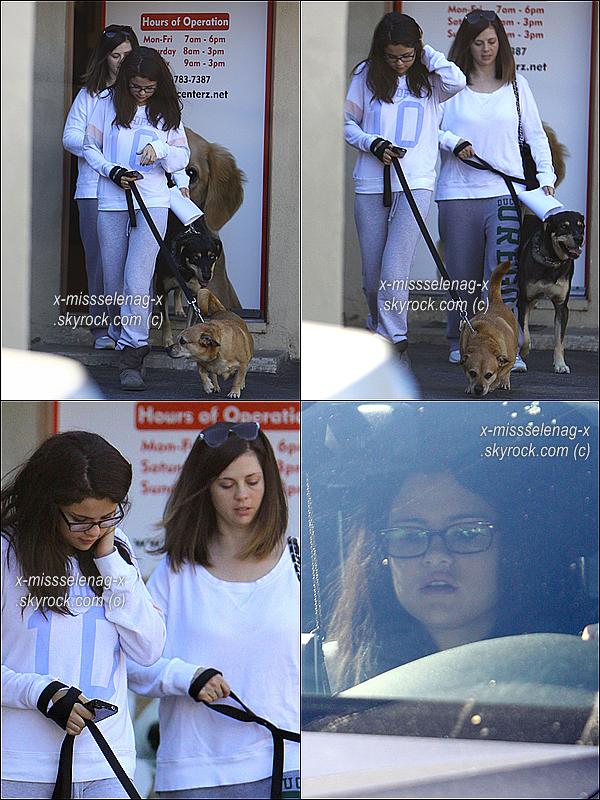 + November 24th  ;   Selly et sa maman sont allées au vétérinaire d'Encino avec leurs chiens. + Découvre deux nouvelles photos du promoshoot que Selena avait fait pour les coques Case Mate. +