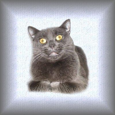 (l) mon chat (l)