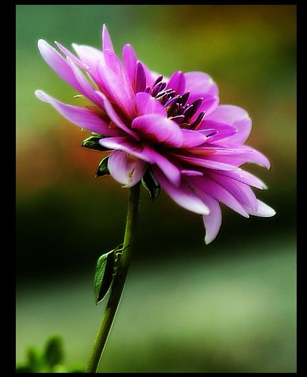 Blog de petale