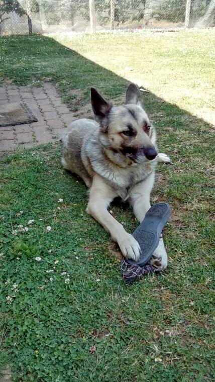 Jeux avec un chausson