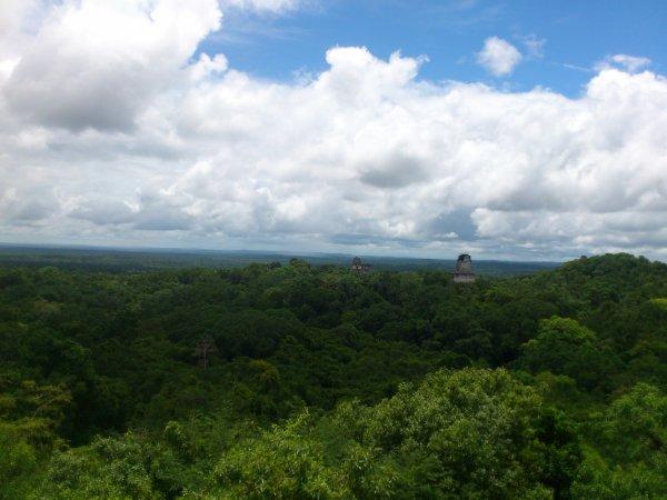 Nous voila à Tikal qui abrite plusieurs temples Maya