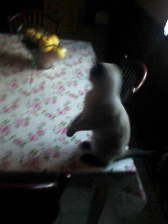 Mon petit chat :3 ♥